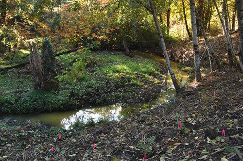 Carter Creek 26