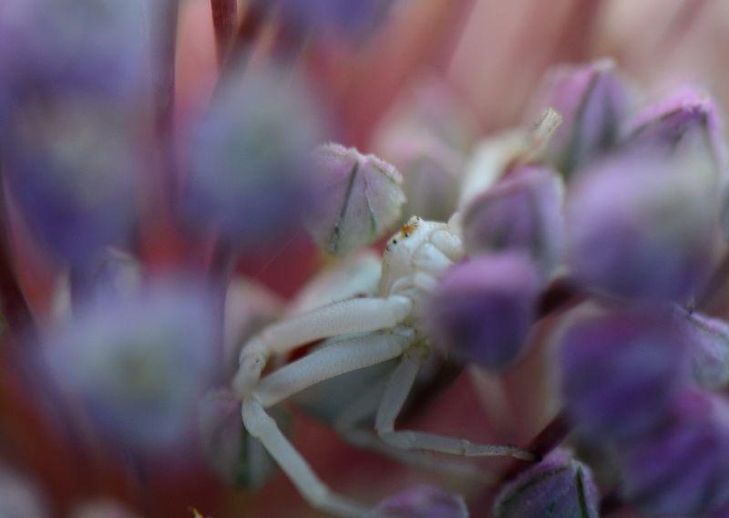 Bee Study -020-