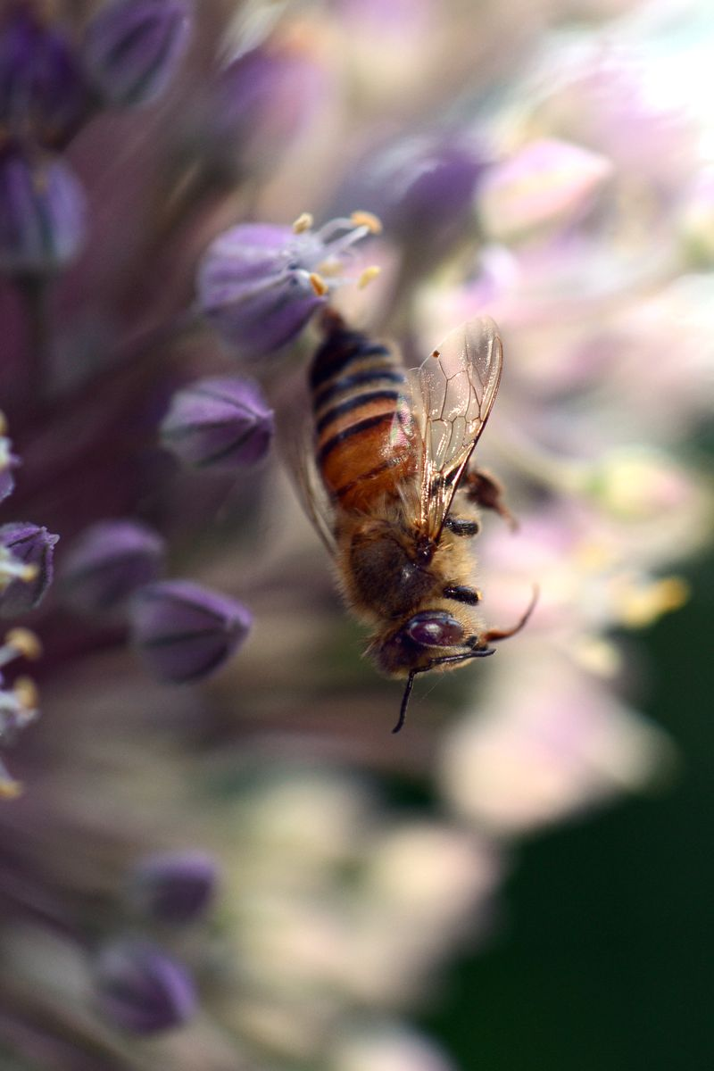 Bee Study -003-