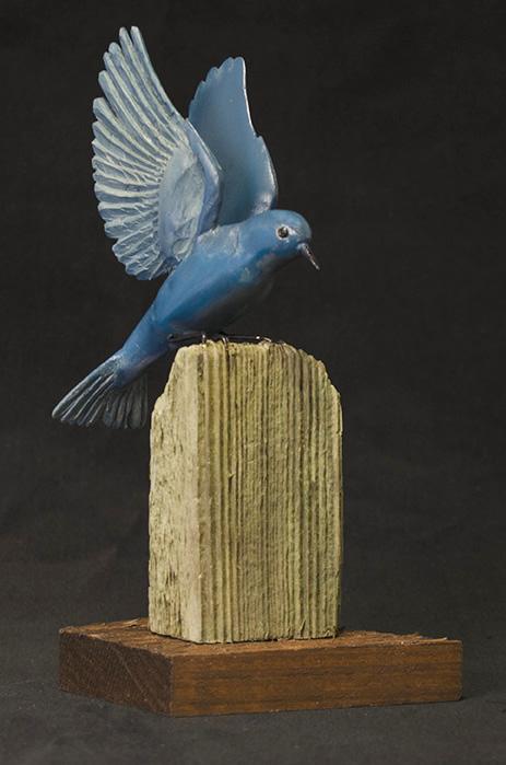 Mtn Bluebird