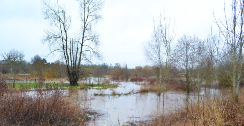 Greenway Park Flood2.
