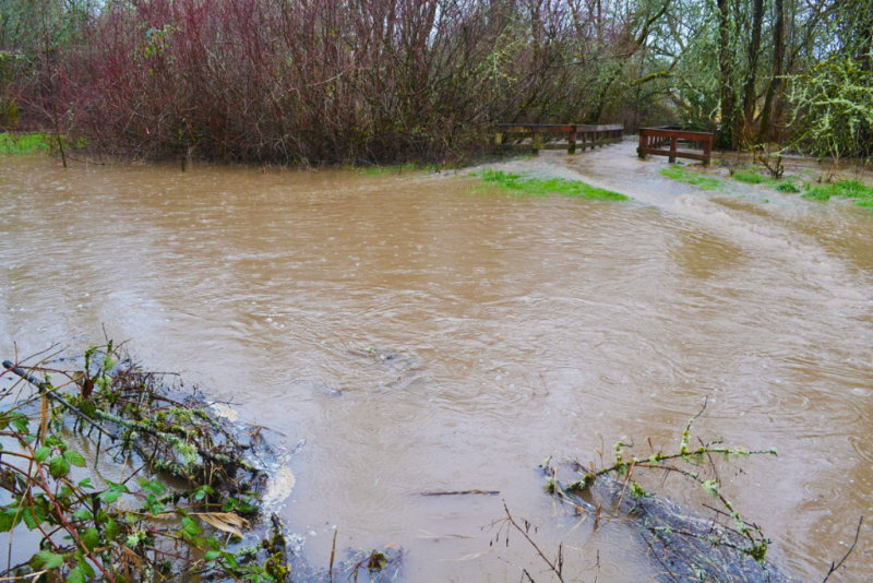 Greenway Park Flood1.