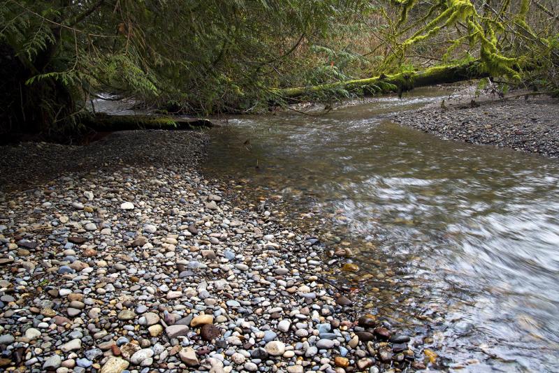 Mclane Creek 1