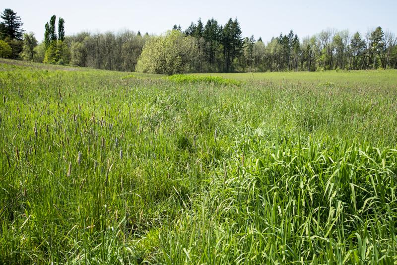 Wetland A