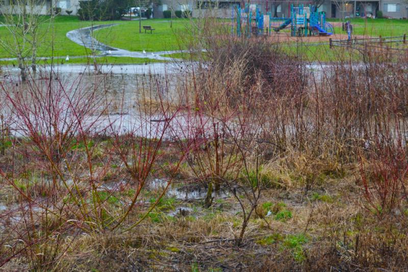 Greenway Park Flood3.