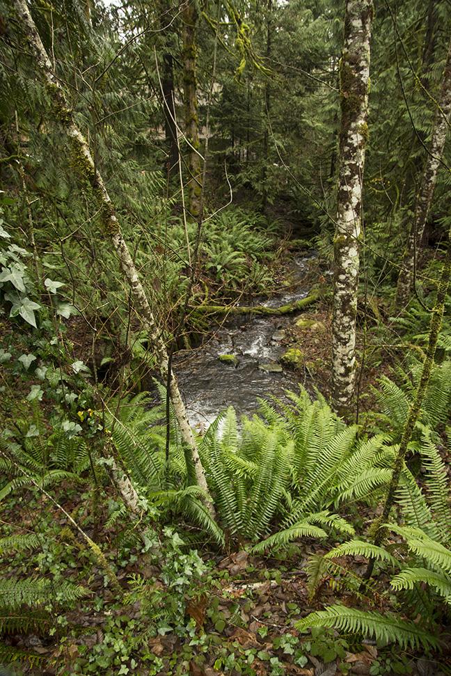 VP-374 Upstream